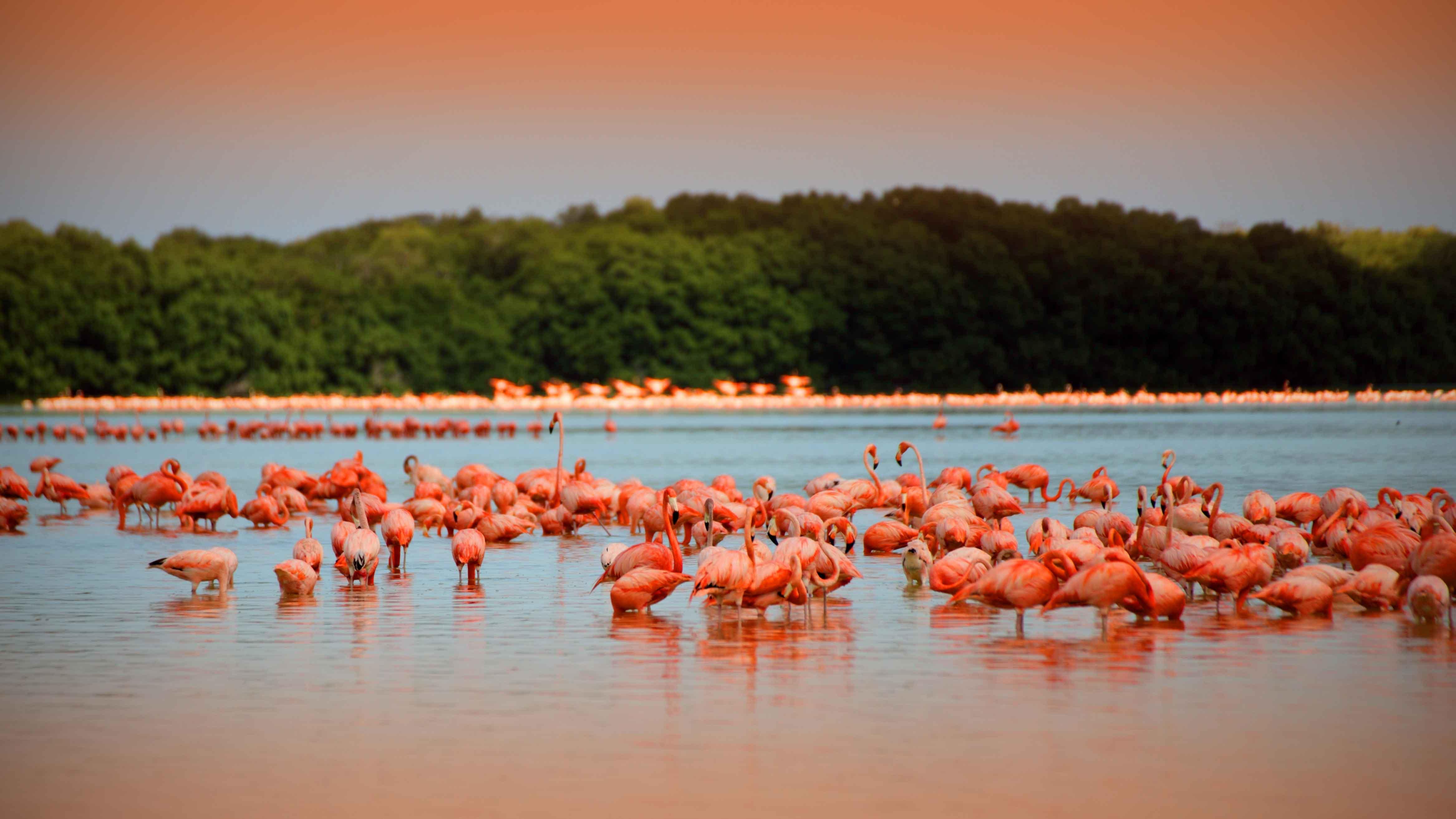 Celestun Flamingos 1 2