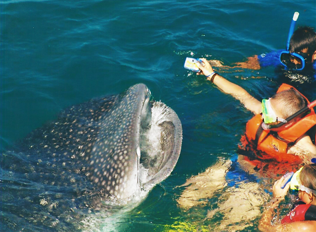 swim with whale sharks 5